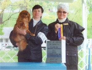 Dora's first Best of Breed win