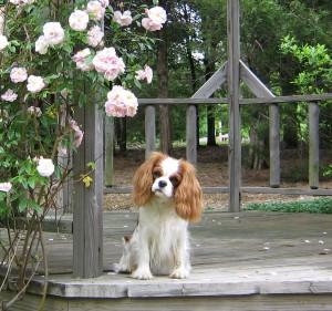 FlowersAndDogs 041