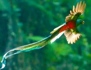 quetzal flying mejor
