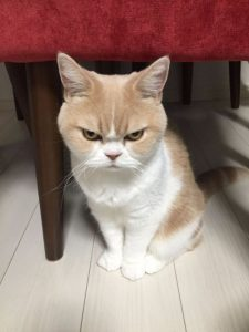 angry-cat2