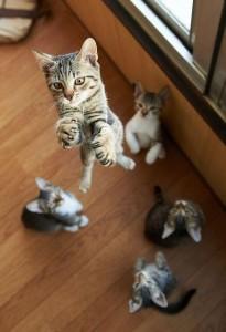 KittenLeap