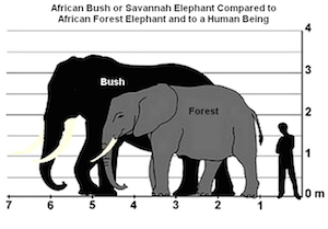 bush_v_forest-elephant
