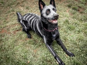 skeleton-dog-halloween-costume-non-toxic-pet-paint-8